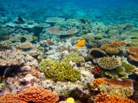 diving-the-colorful-great-barrier-reef